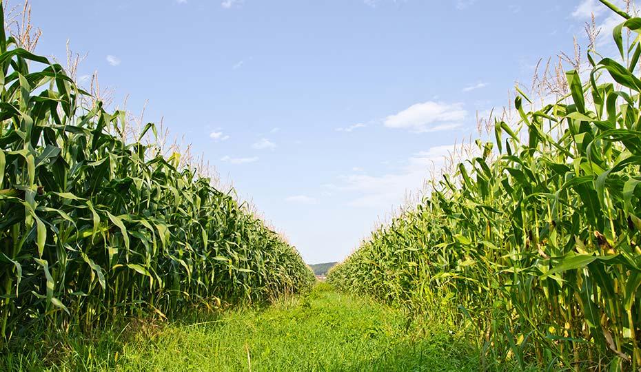 rischi-agricoli-bazzi-partners-broker-assicurazione